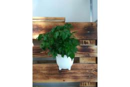 Комплект Альфа (ромб+горшок) - интернет-магазин Крассула