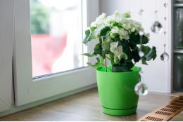 Горшок для цветов Фрезия
