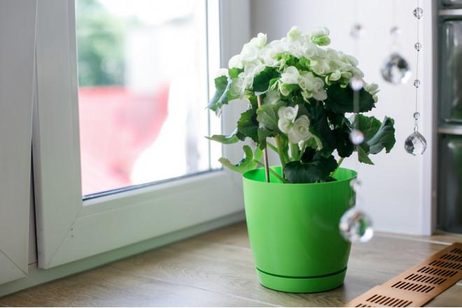 Горшок для цветов Фрезия - интернет-магазин Крассула