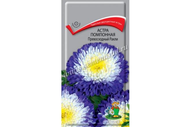 Астра помпонная Превосходный Ракли - интернет-магазин Крассула