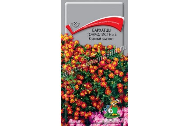 Бархатцы тонколистные Красный самоцвет - интернет-магазин Крассула