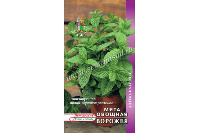 Мята овощная Ворожея - интернет-магазин Крассула