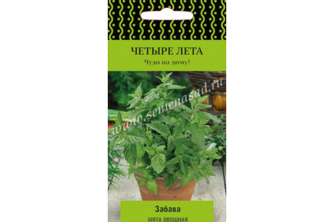 Мята овощная Забава - интернет-магазин Крассула