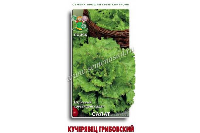Салат Кучерявец Грибовский - интернет-магазин Крассула